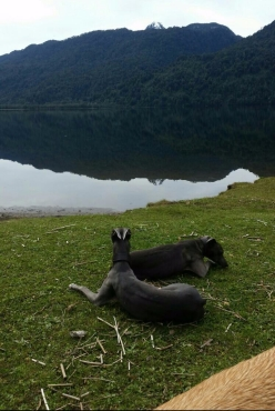 Relaxing by the shore of Lago Camutue